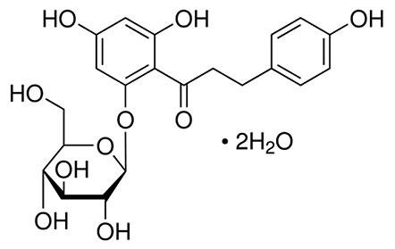 Phloridzin-Dihydrate Structure