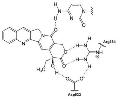 Camptothecin Structure